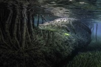 photo-mango-forest-14